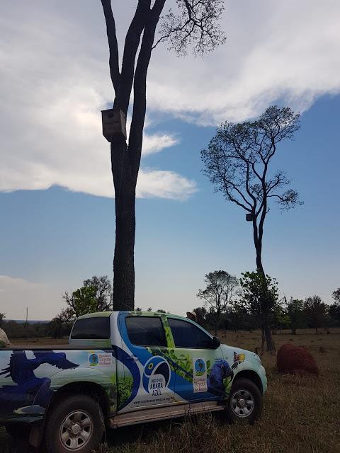 Especialistas do Projeto Arara Azul vistoriam ninhos artificiais